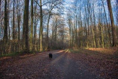 Wanderlust_an_der_Emscher_01 (55)