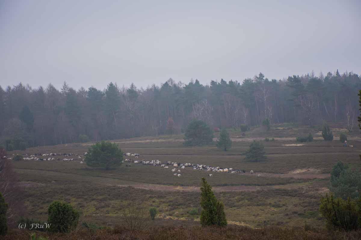 Sellhorn_Totengrund (143)