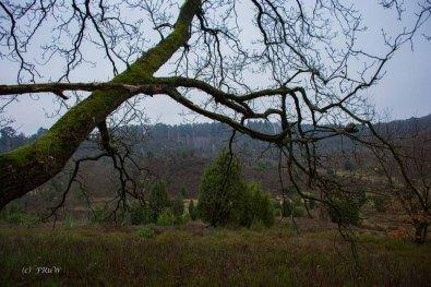 Sellhorn_Totengrund (48)