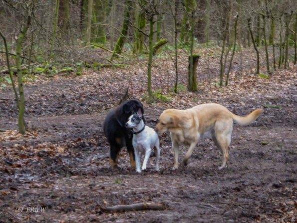 Wildpark_HoehenfelderSee_DellbrueckerHeide (146)