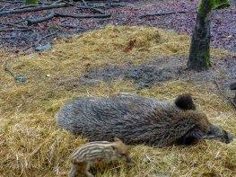 Wildpark_HoehenfelderSee_DellbrueckerHeide (83)