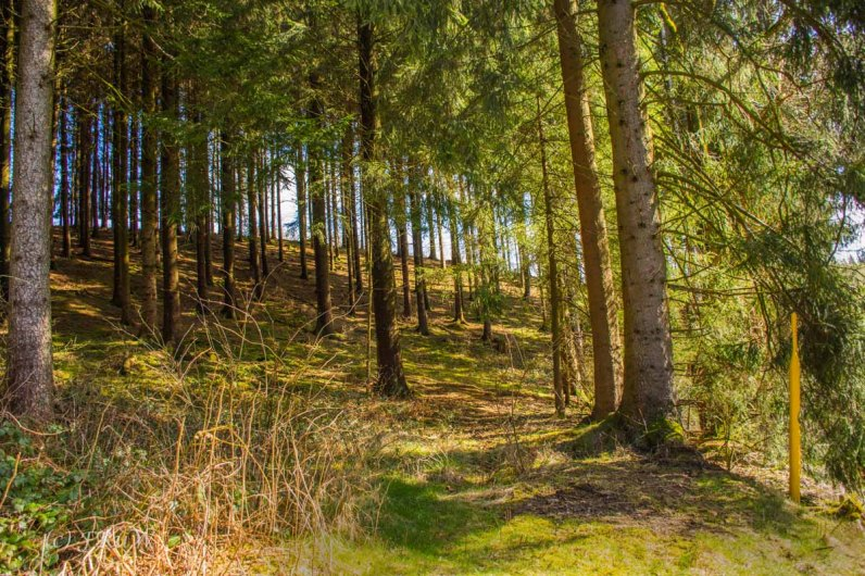 Wildenburger Land (111)