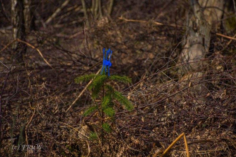Hinweis an Landschaftsgärtner, lasst mich stehen, ich will noch wachsen