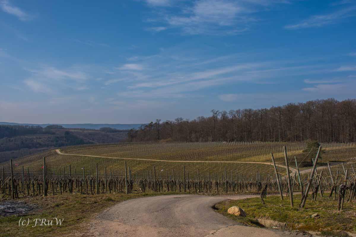 Trittenheim (112)