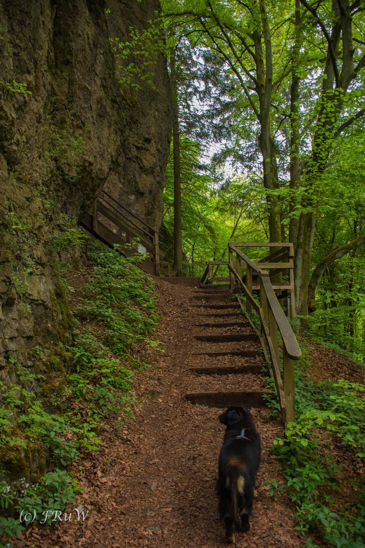 Gerolsteiner Felsenweg (107)