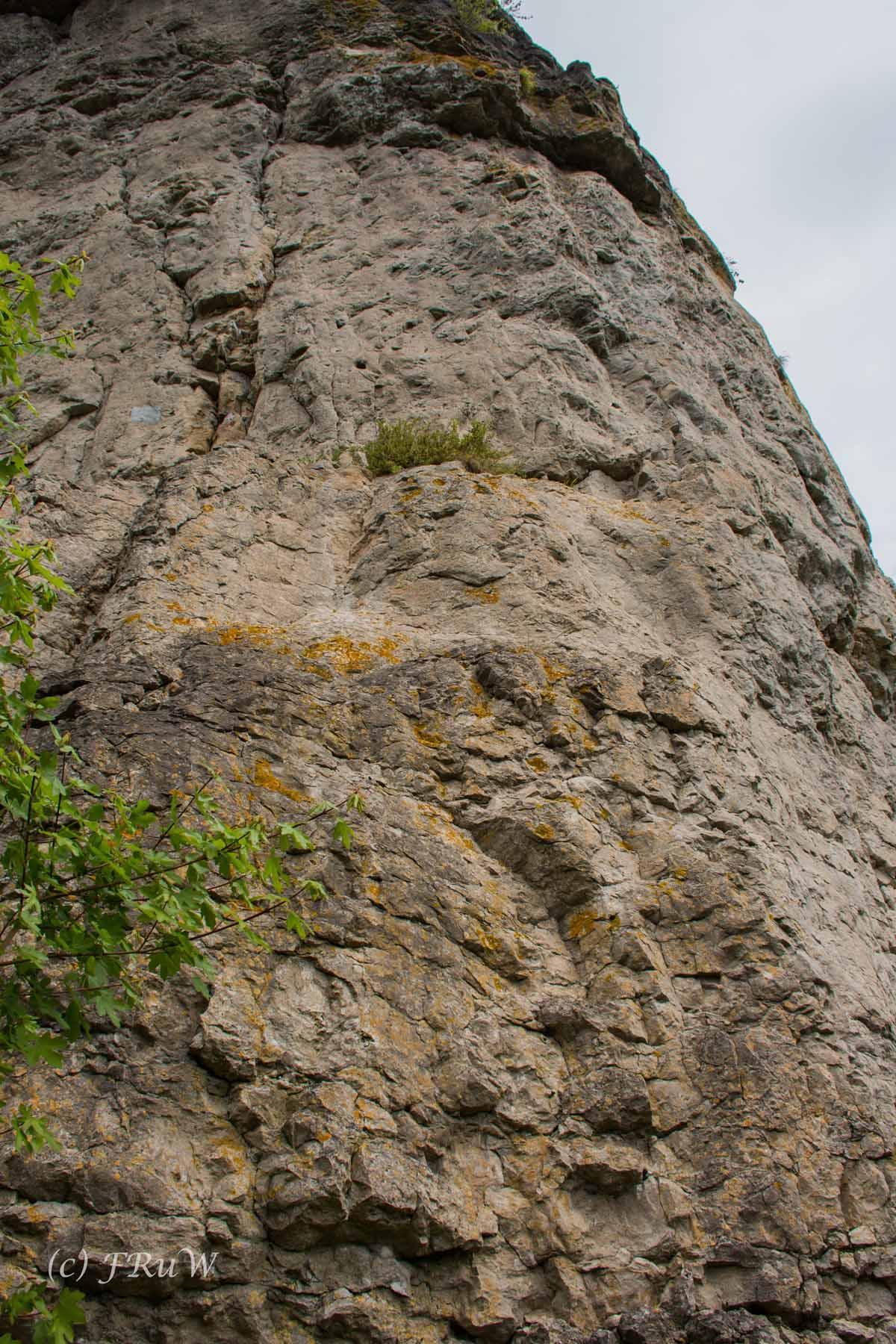 Gerolsteiner Felsenweg (25)