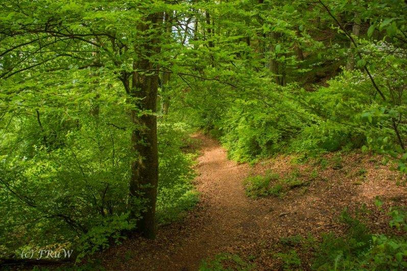 Gerolsteiner Felsenweg (28)