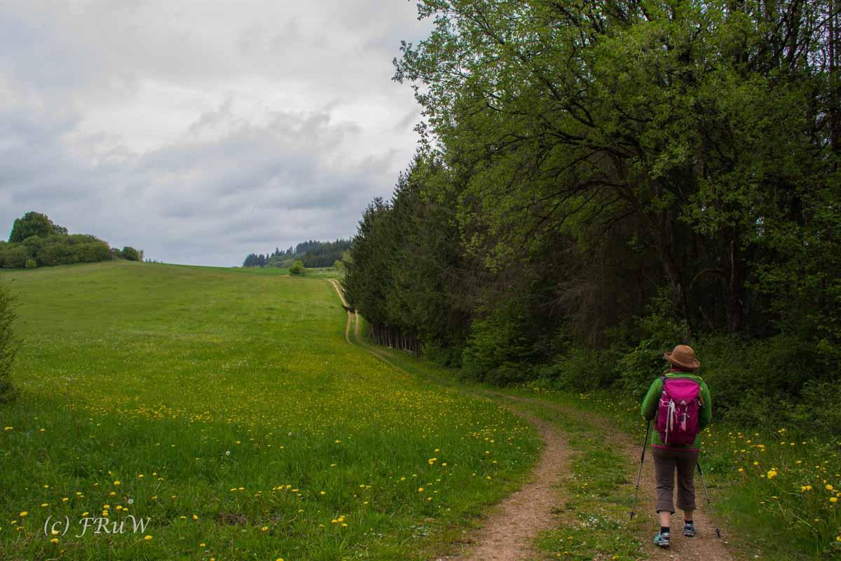 Gerolsteiner Felsenweg (54)