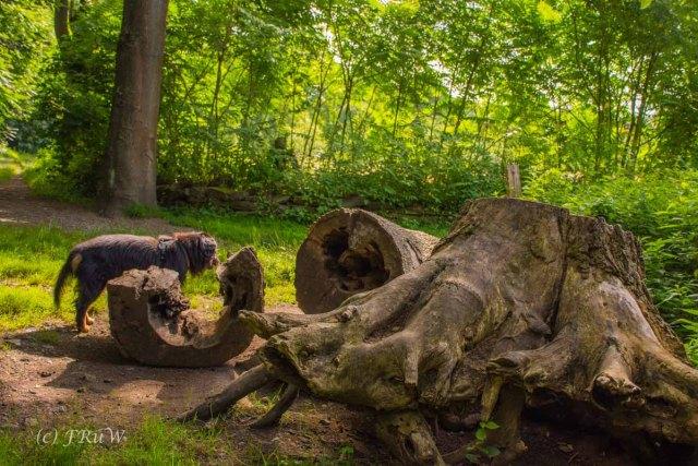 Kloster Knechtsteden_und_Tierpark_0407