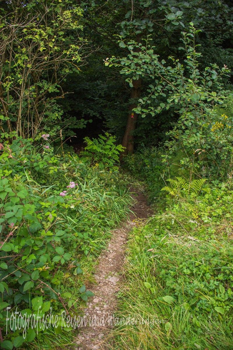 BergischerStreifzugBaumweg (170)