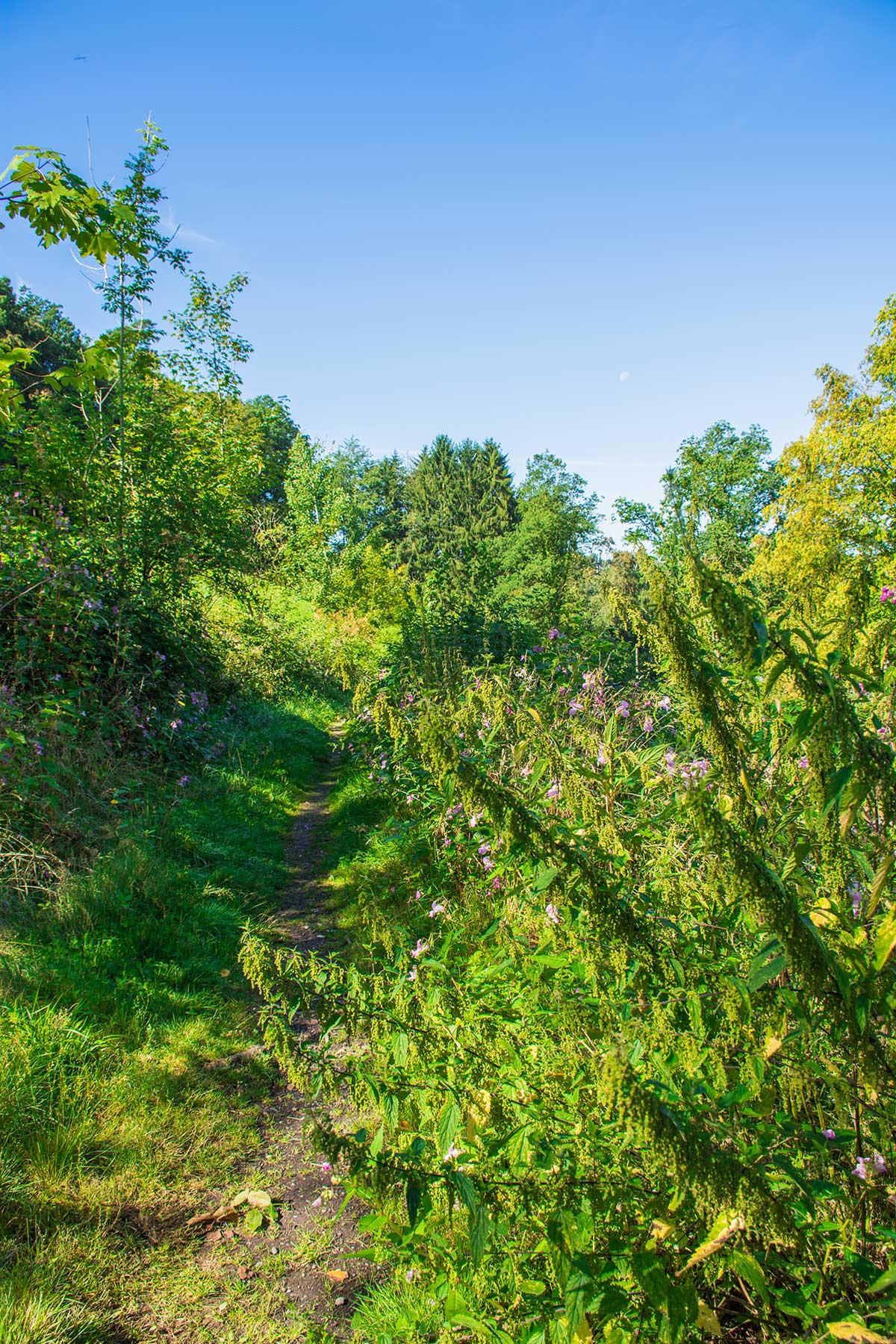 BergischerStreifzugBergbauweg-(4)