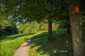 BergischerStreifzugFuhrmannsweg-(341)