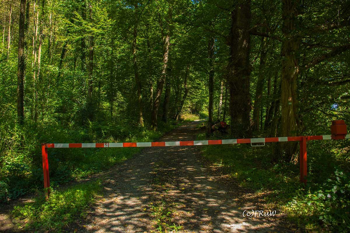 ErlebniswegeSieg_Holzweg-(4)