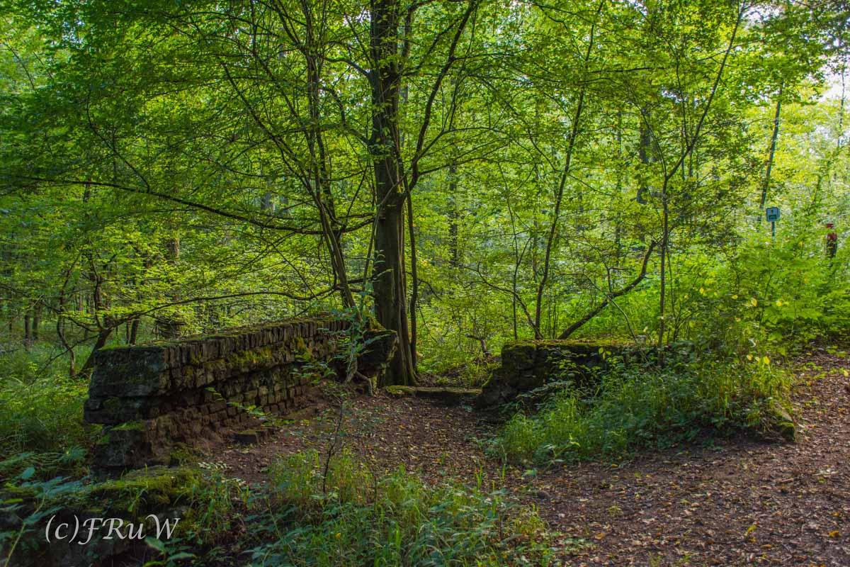Mauerreste eines Brunnenkellers - Hier blüht keine Heide und doch..