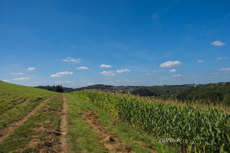 Bergischer_Streifzug_Pilgerweg (250)