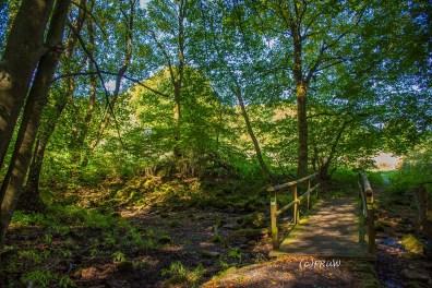 fuchskaute_erlebnisschleife_westerwald-226