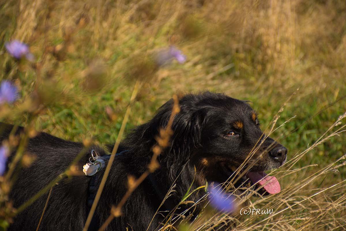 """Spike mein Hund im Thema """"Das bin ich"""""""