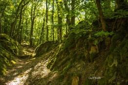 wacholder_ginster_-pilgerpfade-bei-st_-jost-30