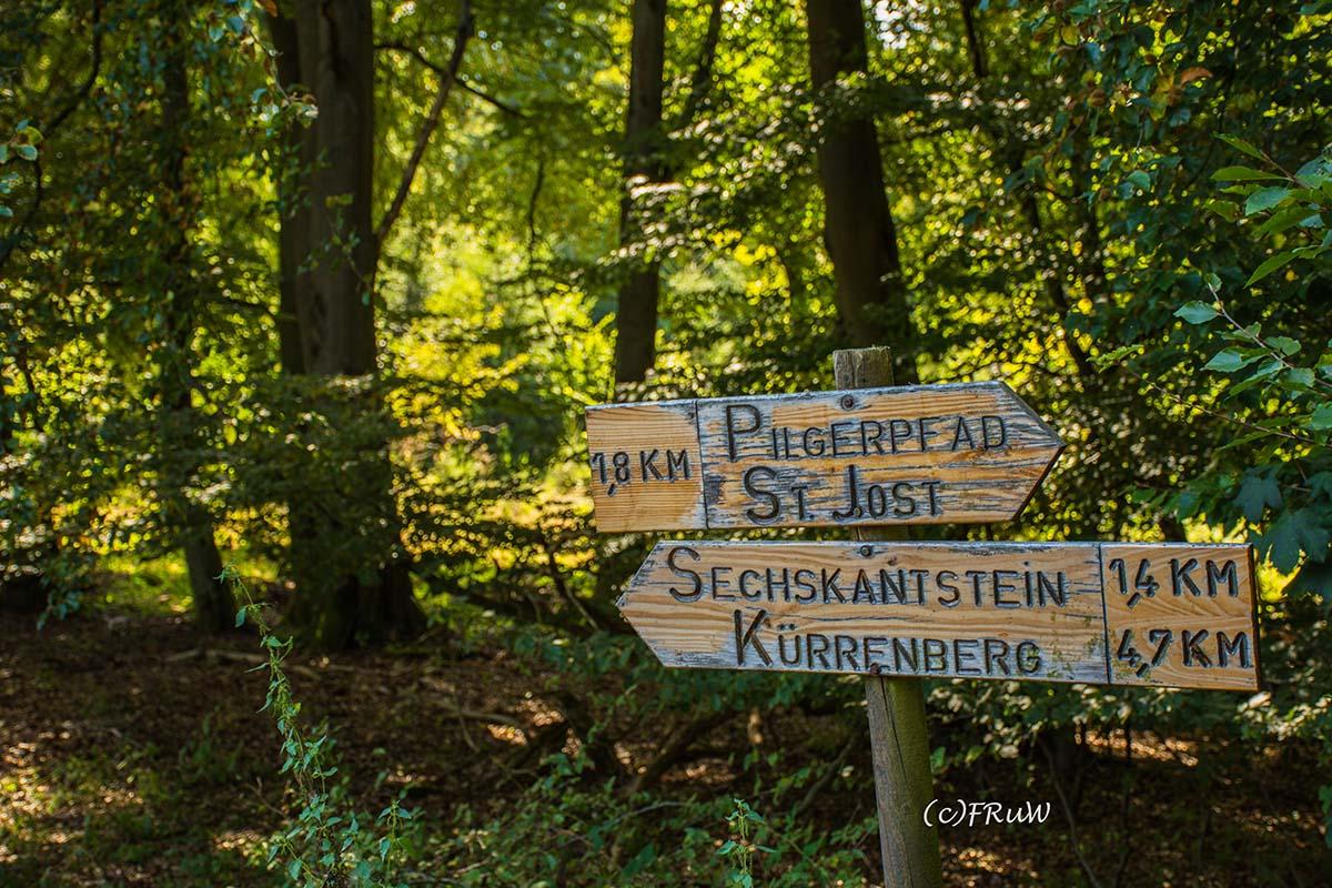 wacholder_ginster_-pilgerpfade-bei-st_-jost-50