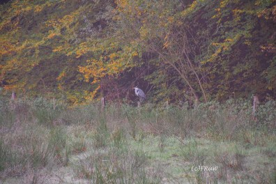 Der Reiher duckt sich aufgeplustert in die Büsche. Dem ist es zum weg fliegen offensichtlich zu kalt