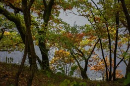 Am Ufer des Obersee