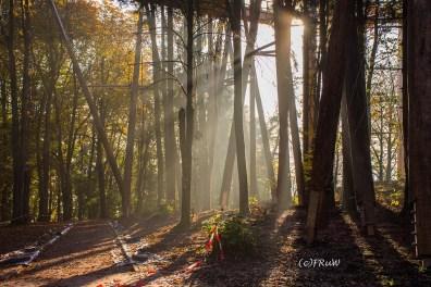 Wald an der Saarschleife