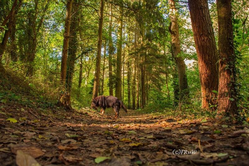 Bild zeigt meinen Hund Spike auf einem Waldweg