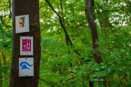 Und da haben wir ihn auf unserem Wanderweg, den Soonwaldsteig