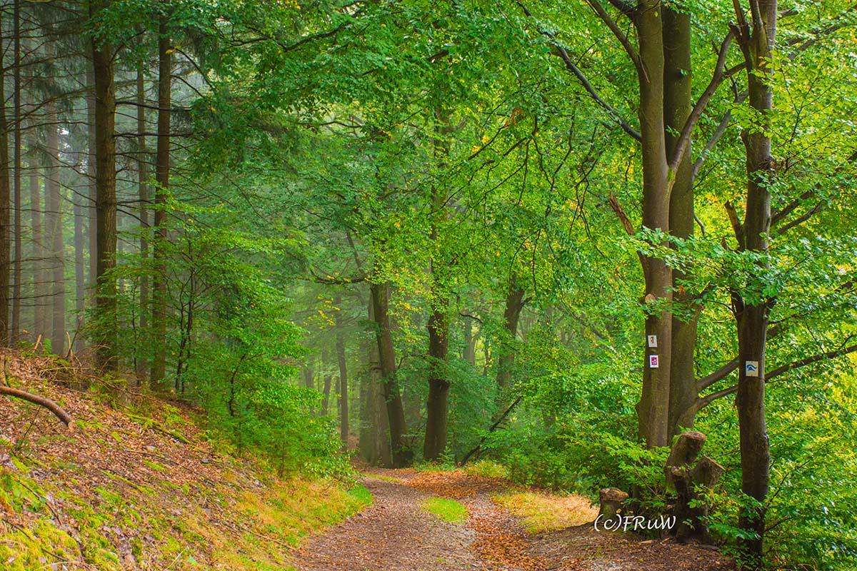Herrlicher Waldweg auf der Traumschleife Heimat