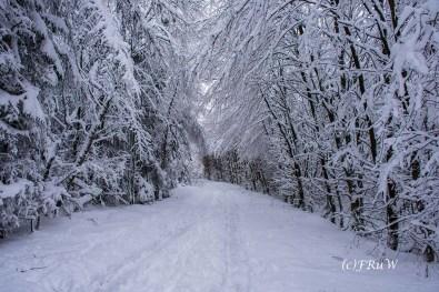 bergischerstreifzugwacholderweg-62