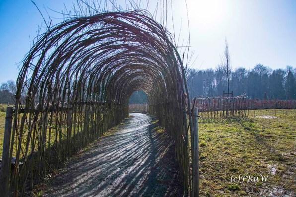 panarbora-burg-windeck-84-von-139