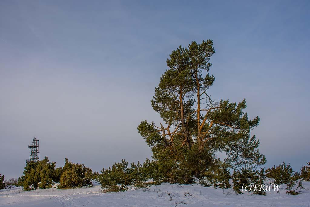 Weg zum Menkepark im Schnee