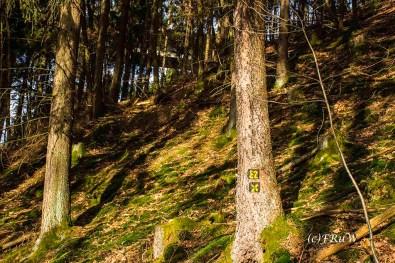 Moos zwischen den Bäumen
