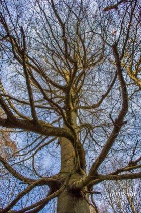 Herrliche Bäume strecken ihre Äste in den Himmel