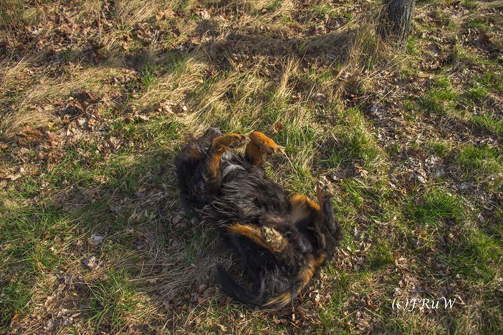 Panoramaweg Kirchwald - Kein Hund, sondern ein Rollmops ;-)