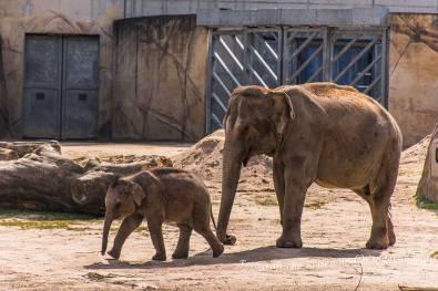Elefantenkindergarten Zoo Köln