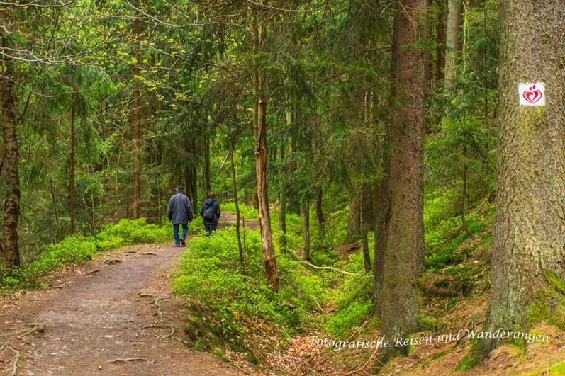 Waldweg Richtung Hahnenklee