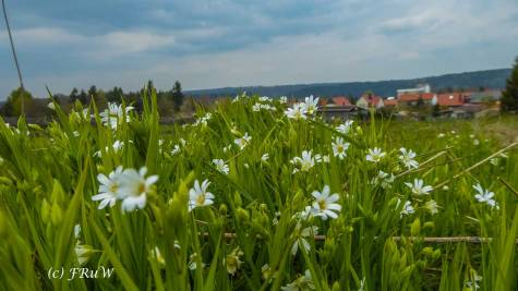 Allrode im Harz