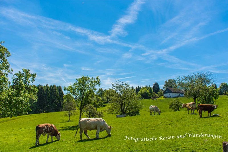 Rundweg-Klasmühle (108)