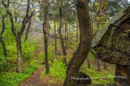 NEbel wabbert immer wieder zwischen den Bäumen