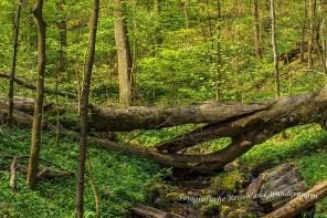 Totholz bleibt liegen