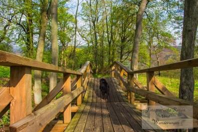 Wieder auf der Brücke an der Burgruine Anhalt