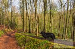 Spike der beste Wanderhund, kurz vor der Rente