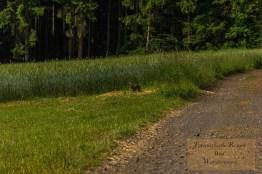 Mürmes- und Antoniusweg (31)