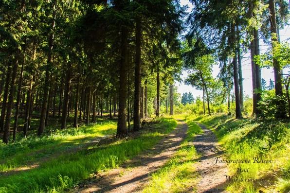 Zum Naturdenkmal Sechs Eichen