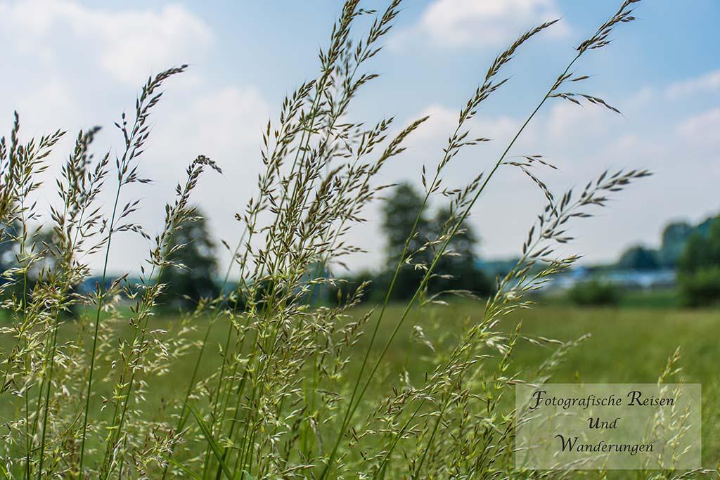 Gräser wiegen im Wind