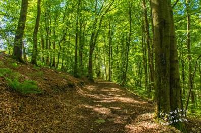 Oberbergischer Lutherweg (123)