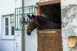 Auf der Suche nach Freunden? Pferde sind wunderbare Tiere