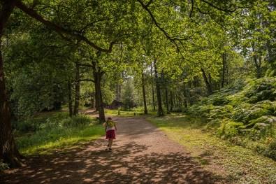 Waldwege im Biotopwildpark Anholter Schweiz