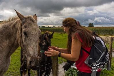 Tanja im Pferdeglück